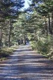 Weiter Spaziergang durch den Wald Lizenzfreie Stockfotografie