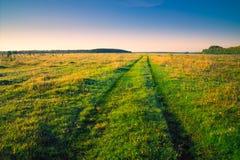 Weiter Weg am grünen Feldsommermorgen Lizenzfreie Stockfotografie