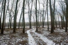 Weiter Weg zwischen Bäumen im dunklen Wald des Winters während Februars Stockfotografie