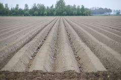 Weitwinkelansicht des Feldes, die nach Ernte von Tulpenbirnen gepflogen worden sind stockbilder
