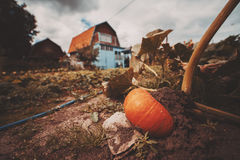 Weitwinkelschuß des großen reifen orange Kürbises lizenzfreie stockfotografie