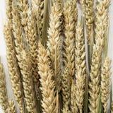 Weizenährchen auf weißem Hintergrund Lizenzfreie Stockfotografie