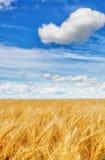 Weizenähren auf einem Hintergrund des bewölkten Himmels Stockfotografie