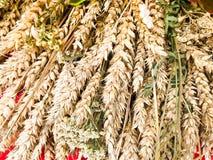 Weizenähren des trockenen Strohs des Heus gesammelt in einem Blumenstrauß mit Samen und Stielen, Blätter Der Hintergrund Beschaff stockbilder