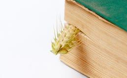 Weizenähren zwischen den Seiten eines alten Buches Stockfotografie