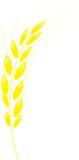 Weizen Vektor Abbildung