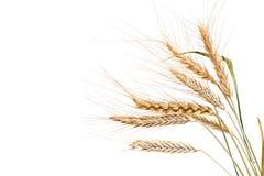 Weizen. Lizenzfreies Stockbild
