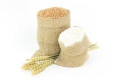 Weizen - Anlagen, Kern, Mehl. Lizenzfreies Stockbild