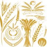 Weizen-Ansammlung Stockfotos