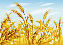Weizen auf dem Gebiet Stockfoto