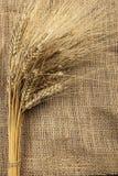 Weizen auf einer Leinwand Stockbilder
