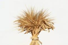 Weizen auf weißem Hintergrund lizenzfreie stockfotos