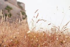 Weizen bei Sonnenuntergang lizenzfreie stockfotografie