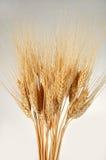 Weizen-Bündel über einem Steigunghintergrund Lizenzfreies Stockbild