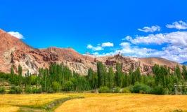 Weizen, der bei Basgo Ladakh bewirtschaftet Lizenzfreie Stockfotos