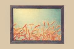 Weizen, der Kunst erntet Stockfotografie