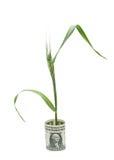 Weizen, der von gefaltetem Dollarschein wächst Stockbild
