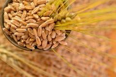 Weizen des Kornes Stockfoto