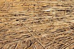 Weizen-Ernte-Feld Lizenzfreie Stockfotos