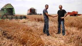 Weizen-Ernten in vollem Gang Lizenzfreie Stockbilder
