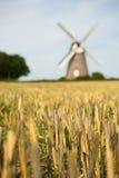 Weizen-Feld mit Windmühle im Hintergrund Lizenzfreies Stockfoto