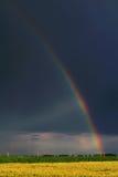 Weizen-Feld-Regenbogen Lizenzfreie Stockbilder