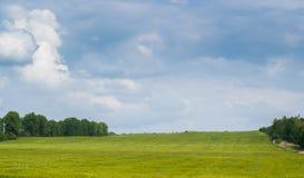 Weizen-Feld unter dem bewölkten Himmel Stockfotos