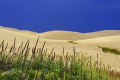 Weizen-Feld, Wildflowers und blauer Himmel Stockfotos