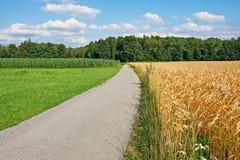 Weizen-Felder Stockfotos