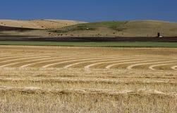 Weizen-Felder Stockfotografie