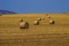 Weizen-Felder 15 Lizenzfreie Stockbilder