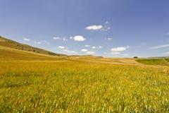Weizen-Felder von Sizilien Stockbild
