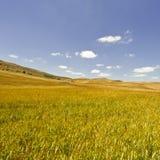 Weizen-Felder von Sizilien Stockfotografie