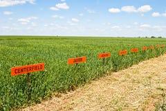 Weizen-Forschungs-Feld Stockfoto