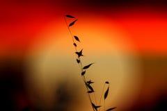 Weizen gegen den heißen Sommer-Sonnenuntergang Stockfoto