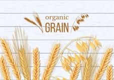 Weizen, Gerste, Hafer und Roggen auf weißem hölzernem Hintergrund Getreideährchen mit organischem Korn der Ohren, der Garbe und d lizenzfreie abbildung