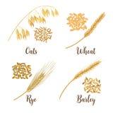 Weizen, Gerste, Hafer und Roggen Ikonen-Vektorsatz der Getreide 3d Vier Getreidekörner und Ohren lizenzfreie abbildung