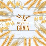 Weizen-, Gersten-, Hafer- und Roggengarbe auf weißem hölzernem Hintergrund Getreideährchen mit organischem Korn der Ohren, der Ga lizenzfreie abbildung