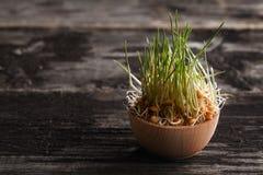 Weizen-Gras-Sprösslinge in einer hölzernen Schüssel Stockfoto