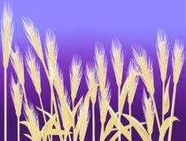 Weizen-Hintergrund Lizenzfreies Stockfoto