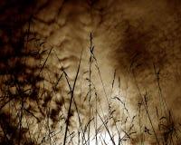 Weizen im Schattenbild Stockfotos