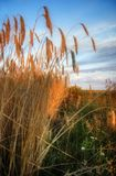 Weizen im sun-3 Lizenzfreies Stockbild