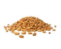 Weizen-Körner Lizenzfreie Stockfotos