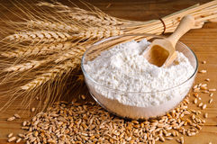 Weizen, Korn und Mehl Lizenzfreies Stockbild