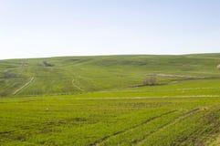 Weizen kultivierte Ackerland, den Weizen, der mit dem Kommen des Frühlinges keimt Stockbilder