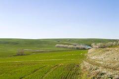 Weizen kultivierte Ackerland, den Weizen, der mit dem Kommen des Frühlinges keimt Stockfotografie