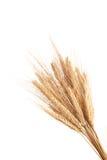 Weizen-Ohren Stockbilder