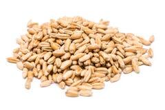 Weizen-Samen Stockbilder