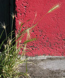 Weizen und Beton lizenzfreies stockbild
