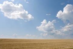 Weizen und Himmel Lizenzfreie Stockfotografie